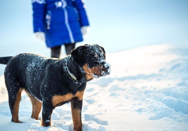 Веселая позитивная молодая собака радостно играет в сельской местности в морозный солнечный день