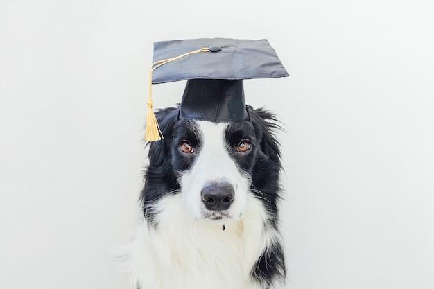 흰색 배경에 격리된 코믹한 졸업 모자를 쓴 자랑스러운 졸업식 강아지 보더 콜리. 학생 교수처럼 졸업 모자에 작은 개. 학교로 돌아가다. 멋진 괴상한 스타일, 재미있는 애완 동물