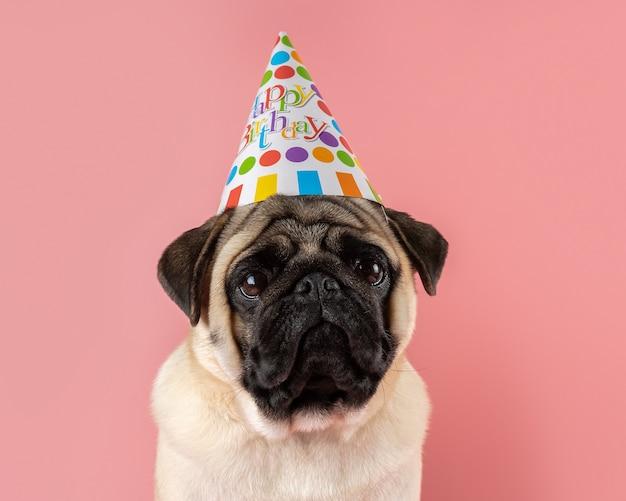 ピンクの背景に誕生日おめでとう帽子をかぶっている面白いパグ犬。