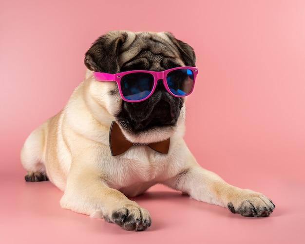 ピンクの背景にピンクのメガネと面白いパグ犬。