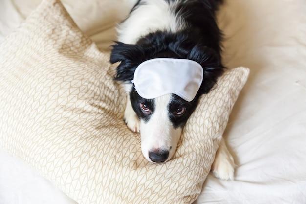 眠っているアイマスクと面白い子犬ボーダーコリーがベッドで枕毛布の上に置く