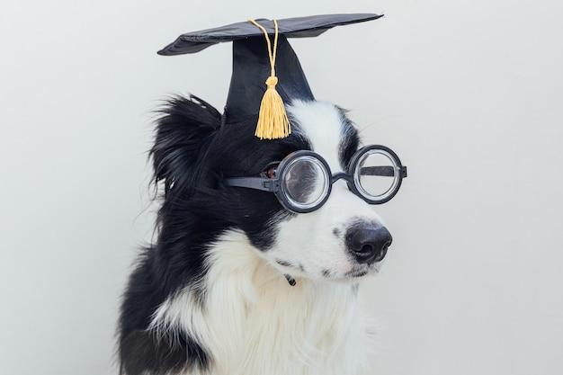 흰색 배경에 분리된 졸업 모자 안경을 쓴 재미있는 강아지 보더. 학생 교수처럼 안경 대학원 모자를 응시하는 개. 학교로 돌아가다. 멋진 괴상한 스타일, 재미있는 애완 동물