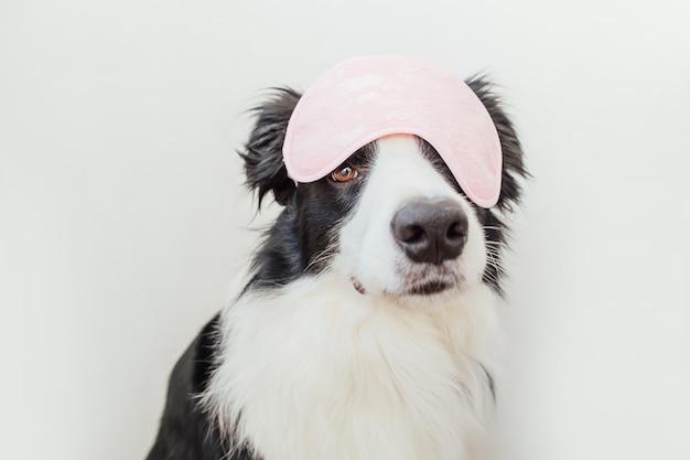 白い背景で隔離の眠っているアイマスクと面白い子犬の犬のボーダーコリー