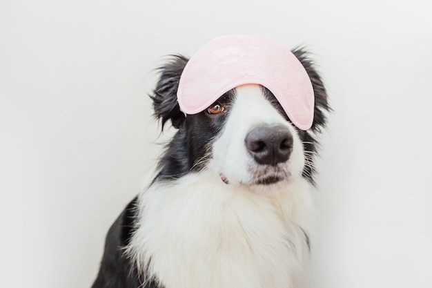 Funny puppy dog border collie with sleeping eye mask isolated on white background