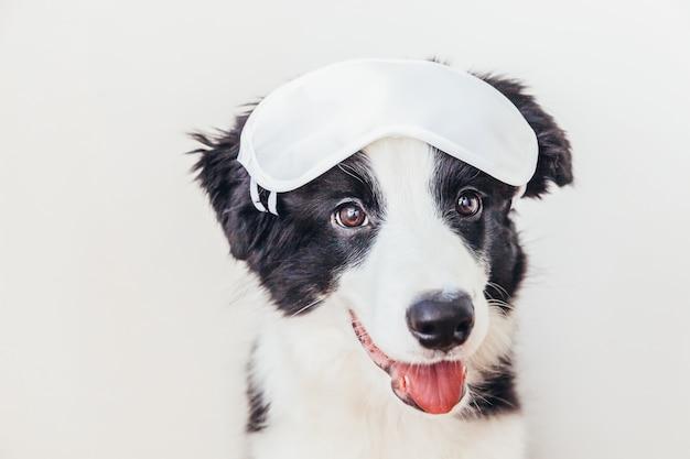 Забавный щенок бордер-колли со спящей маской для глаз на белом фоне