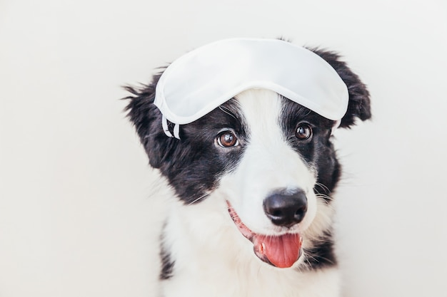 Funny puppy dog border collie with sleeping eye mask on white background