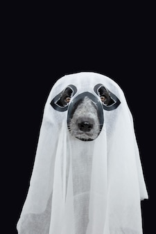 Funny puppy dog celebrating halloween dressed as a ghost. isolated on black background.