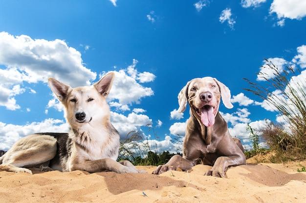Забавные породистые собаки, лежащие на куче песка на фоне облачного неба с ярким солнцем на окраине города