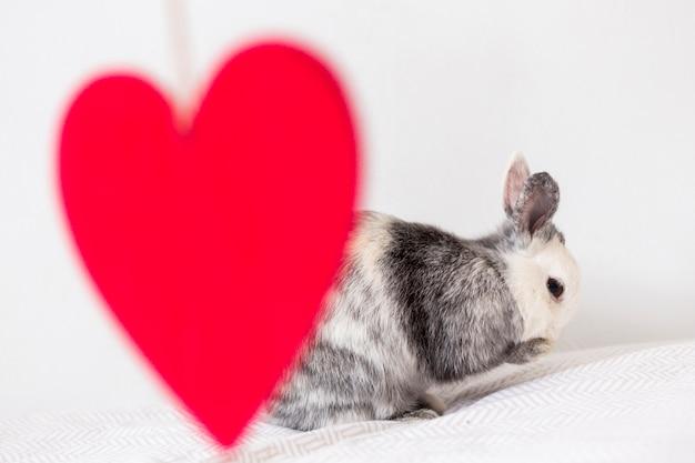 Забавный кролик и декоративное красное сердце