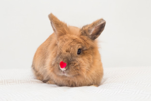 Funny rabbit with little decorative red heart on nose