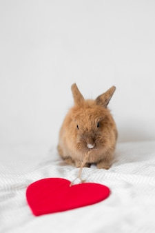Funny rabbit with thread of decorative heart