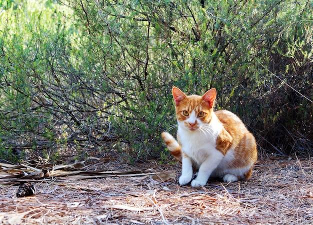 公園の芝生の上に座っている面白い赤い大人の猫。路上でホームレスと野良猫