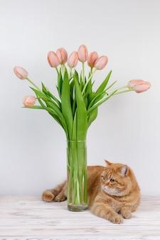 白い上のテキストの子猫とチューリップのためのコピースペースとテーブルの上の面白い赤い猫と花瓶のピンクの花