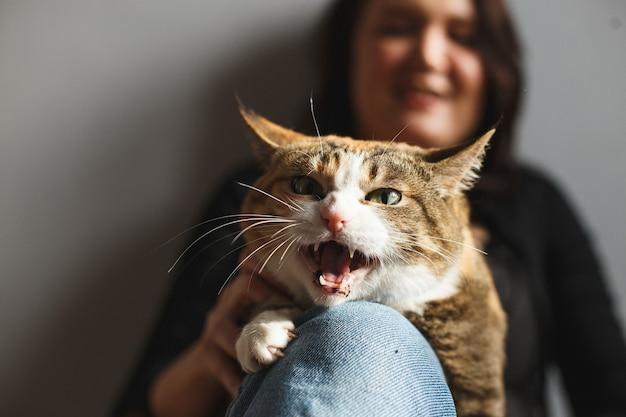 웃기는 빨간 고양이가 소유자 청바지와 야옹에 발톱을 쥐고
