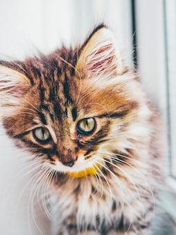 발코니에서 재미있는 휴식 고양이