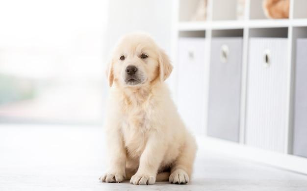 Funny retriever puppy