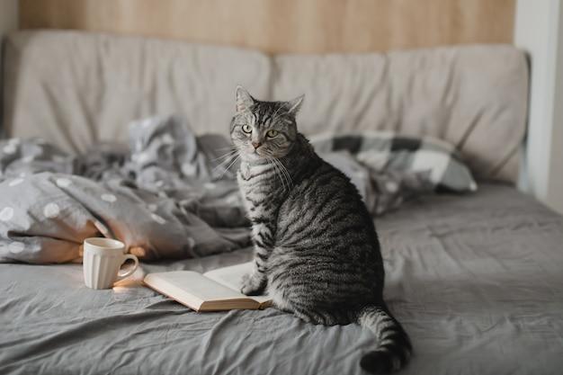 Забавный шотландский прямоухий кот лежит в постели с книгой в уютной домашней атмосфере