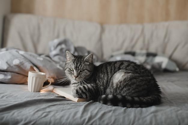 本と一緒にベッドに横たわっている面白いスコティッシュストレート猫