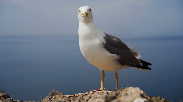 해변에 서 있는 재미있는 갈매기 새를 닫습니다.