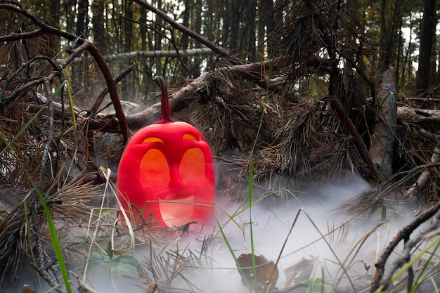 Funny smile halloween pumpkin colored in pink  in autumn forest in smoke or fog jack o lantern