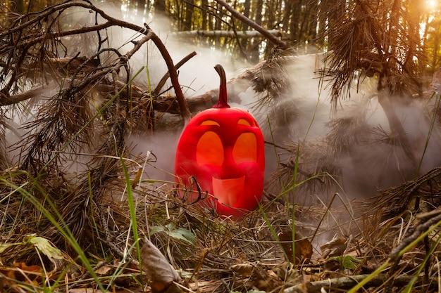 Funny smile halloween pumpkin pink autumn forest in smoke or vapor jack o lantern on needles of fir