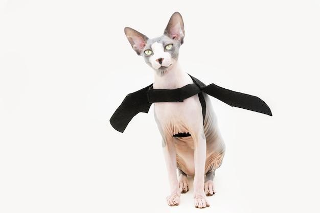 Забавный кот сфинкс празднует хэллоуин или карнавал в страшном костюме и черной летучей мыши на белой поверхности.
