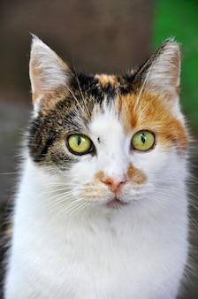 Забавная пятнистая разноцветная морда кошки и комар