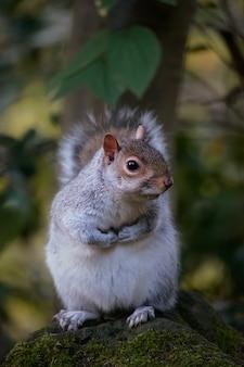 Забавная белка сидит в осеннем парке данфермлин, шотландия
