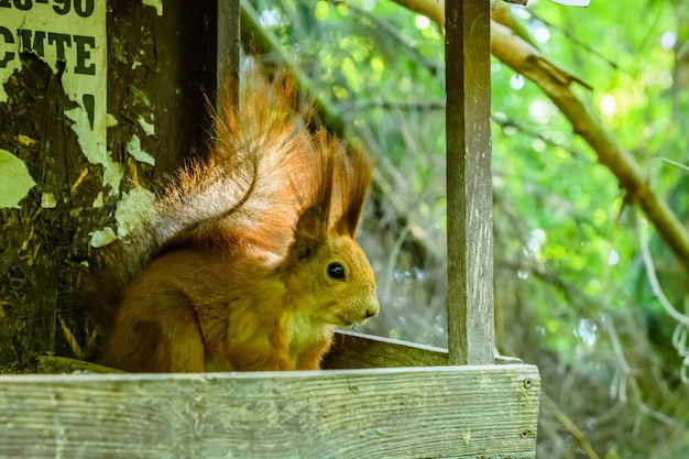 Funny squirrel on the tree at summer