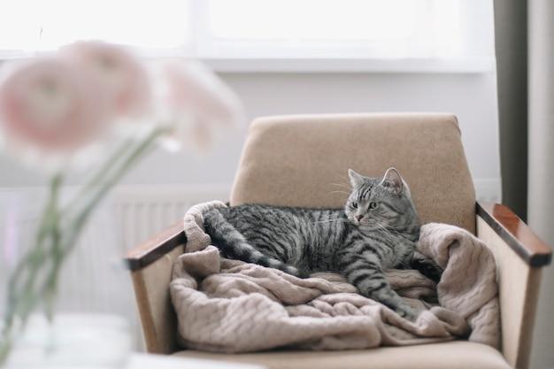 椅子に横たわっている面白いぶち子猫猫