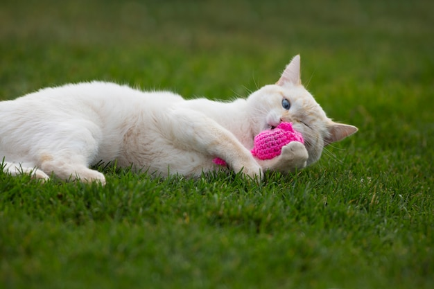 Funny white cat plays with pink crochet catnip mouse