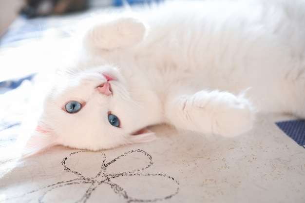 Funny white fluffy playful cat lying on the bed