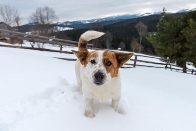 Забавная молодая собака в зимней горе