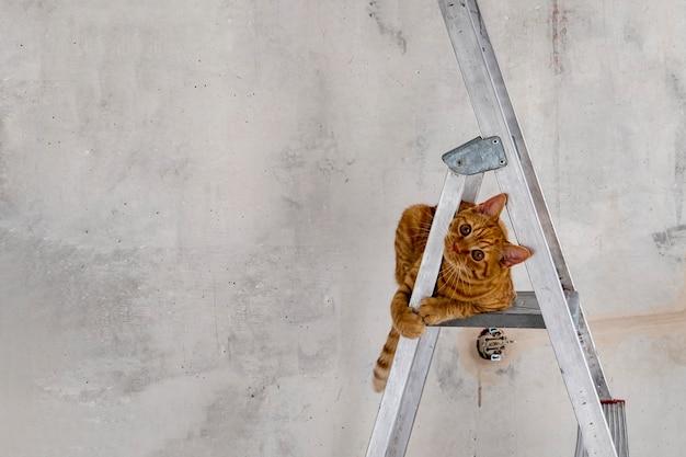 Забавный молодой рыжий полосатый кот сидит на верхней ступеньке стремянки