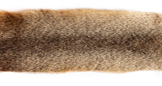 白い背景の上の毛皮のテクスチャのクローズアップの背景