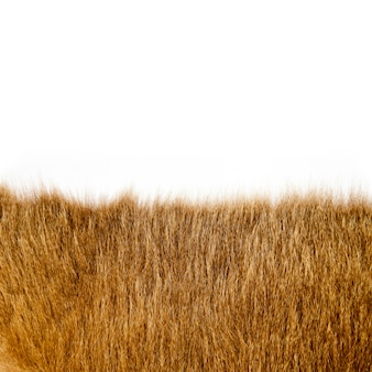 Fur texture closeup