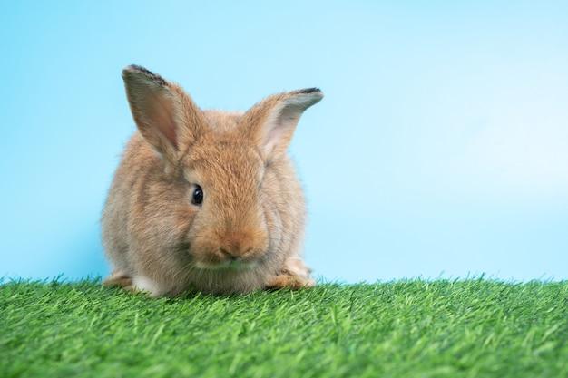 모피와 푹신한 귀여운 검은 토끼