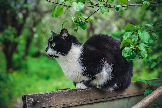 木製のフェンスに座っている毛皮のような黒と白の猫
