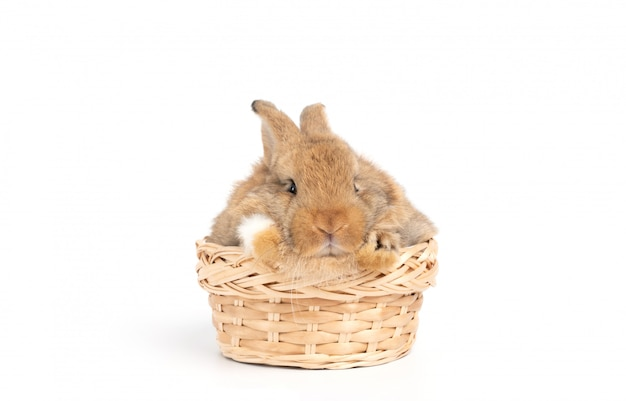 Furry and fluffy cute red brown rabbit erect ears are sitting in basket, isolated on white background.