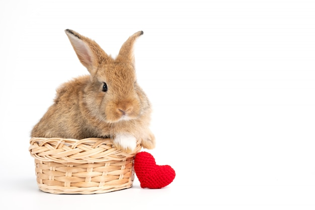 Furry and fluffy cute red brown rabbit erect ears are sitting in basket with a red heart beside,