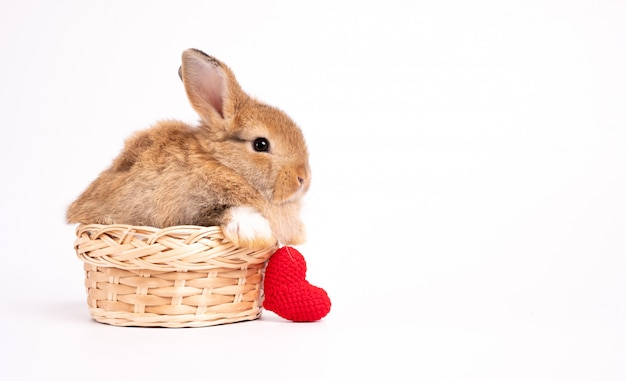 Furry and fluffy cute red brown rabbit erect ears are sitting in basket with a red heart beside