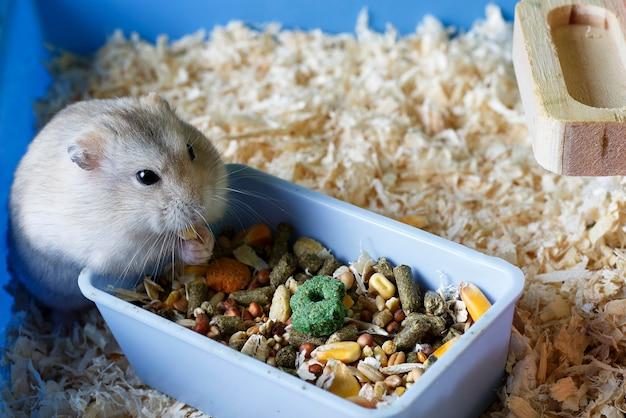 Пушистый хомяк ест еду рядом с кормушкой в клетке