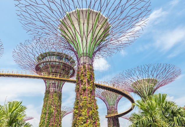 Futuristic super trees in the center of singapore in gardens by the bay.