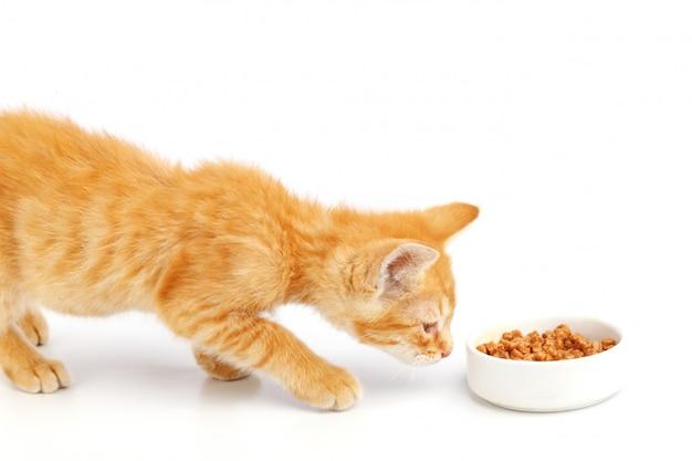 生gの子猫はボウルからキャットフードを食べます。