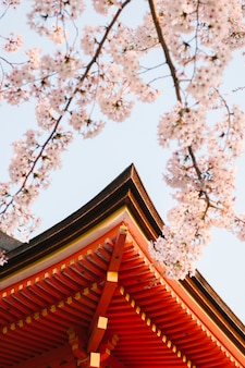 Gable of temple and sakura