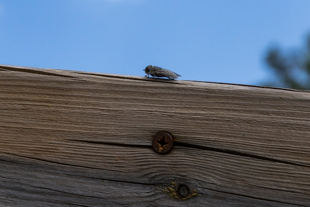Gadfly rested on a wood