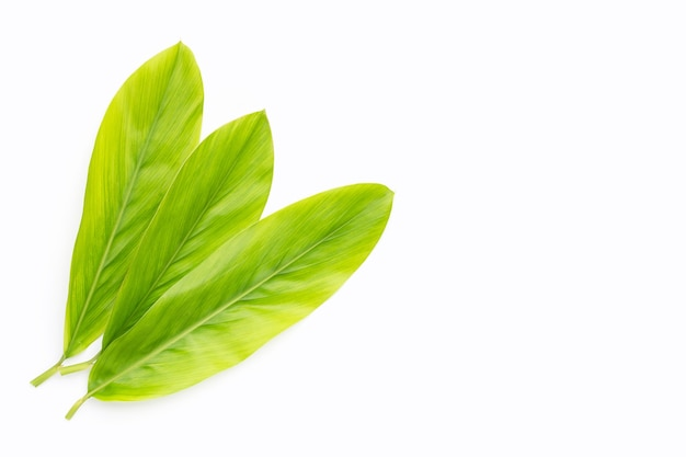 Galangal leaves on white background.