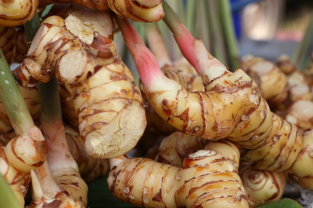 Galangal at the market
