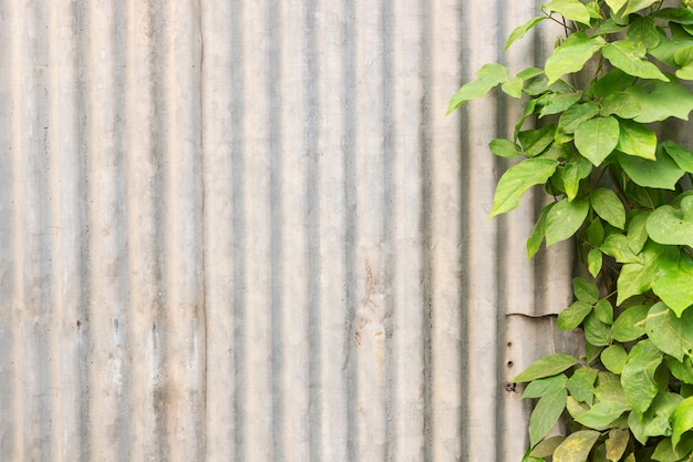 Galvanized wall with green plant