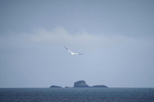 Ошар летит в голубом туманном небе